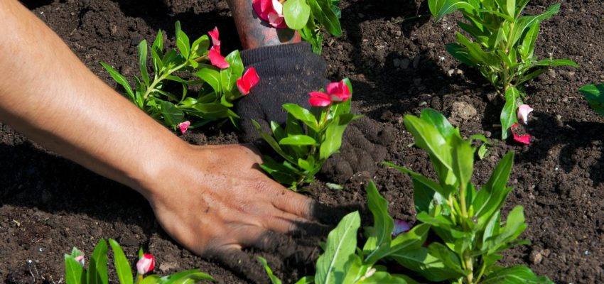 <b>Designing Your Garden (What Makes A Good Garden)</b>